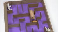 将仓鼠送进6层金字塔迷宫,它能顺利逃脱吗?结果你肯定没想到!