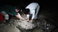 阿烽夜里去抓上岸换壳的青蟹,这蟹非常值钱美味,给湖南网友尝鲜