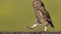 """脖子以下全是腿!别被猫头鹰呆萌的外表迷惑了,这才叫""""大长腿"""""""