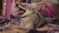 女孩捡回家一只流浪狗,养了3年才发现,这狗越长越不对劲!