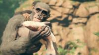 幽灵《先祖:人类奥德赛》01史前一千万年的猴子妈妈