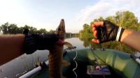野外钓梭子鱼