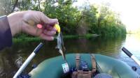 野外钓鱼之鲈鱼