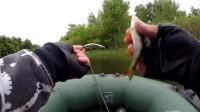 钓梭子鱼和鲈鱼