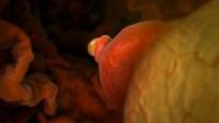 3D动画直击受精卵形成全过程,看完感慨母亲不易