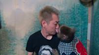 被猴子强吻!西方人钟爱的日本猴子居酒屋,除了吃饭你还能干点啥?