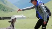 一路成年:达康书记吴刚这么萌的,不敢喂山羊,带毛的都害怕