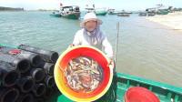 老四出海终于抓到猛货了,海货一个接一个钻进鳗笼,今天小赚一笔