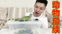 乌龟和中国水龙怎么样啦?乌龟还是那么萌?水龙还是那么凶吗?