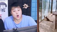 """憋笑大挑战:猴子打破动物园的玻璃,这是要""""越狱""""吗?"""
