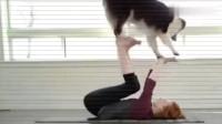 狗狗好福气,能和女铲屎官练瑜伽,这得有多少人羡慕啊!