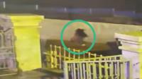 涠洲岛19岁失联女孩最后影像曝光 监控显示其一路奔跑