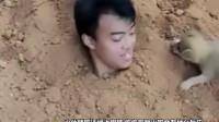 男子假装把自己埋土里,小土狗会怎么办?感觉很暖心