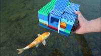 小伙拿乐高积木制作出小型鱼缸,养鱼还真的不错,让你见识一下