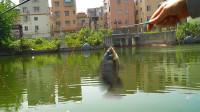 【野钓很好玩】 001:小野河轻松钓到泰鲮与罗非鱼