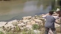 男子水里发现条长五米眼镜王蛇,大叔霸气,竟扔石头去砸