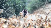 25岁漂亮女孩不愿打工,独自一人深山养鸡,市场不景气面临亏本!