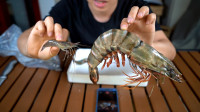 试吃一只一斤重的老虎虾,241元买的,这缺斤少两的有点太严重了吧!