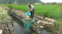 鱼群被困水沟里,小莫用大抄网捞鱼,2小时收获十几斤野货