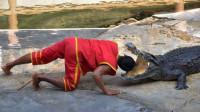 泰国鳄鱼表演,饲养员把头伸进鳄鱼口中,下一秒意外发生了!
