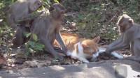 这年头,连猴子都开始撸猫了