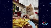 猫的尾巴和猫是两种生物,常常可以这么玩…
