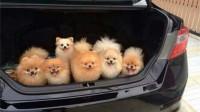 汽车后备箱中,最好不要放四类物品,到头来吃亏的只能是自己