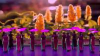 时装表演《花开中国》