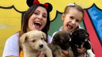 寓教于乐!小萝莉和妈妈体验照顾遗弃的小狗狗,看完果断转发了