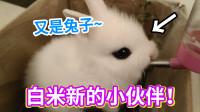 白米新的小伙伴,這又是一只兔子!乖乖的嫉妒心爆發了!
