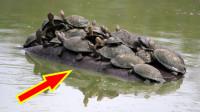 男子河边发现一群乌龟,掏出相机拍照,看清后吓得撒腿就跑