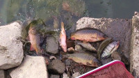 野钓很好玩017:看看这次钓到一堆什么鱼?