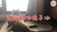 【巧克力】『橘子冰的日常』- 神仙猫咪橘子冰