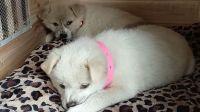 树林捡回小奶狗600天,萌萌哒的小可爱长成了温柔乖巧的大姐姐