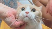 让我们看看哪只小猫咪缩水最严重呀