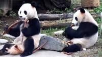 """沒有一只熊能逃得開""""別熊手里的更香""""定律,既然你還沒空吃,那就讓我幫你先嘗嘗吧"""
