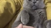 猫咪:何必跟朕搞这一套,早点拿钱出来不就完事了吗?
