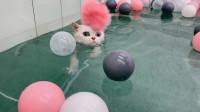 发现一个会游泳的猫咪,真的是让人佩服
