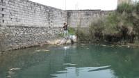 小莫野钓,被高墙围起来的深潭鱼都饿疯了,鱼饵入水就不见漂