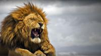 雄狮正在午睡,饲养员上去就吻,结果接下来发生的事情让人想不到