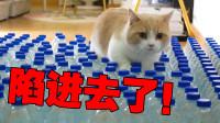 当饥饿的猫被200个塑料瓶堵住时……会怎样?