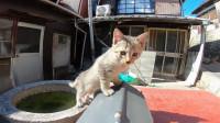 霸气的小奶猫吃奶,摁住同伴的脑袋,挤走同伴的身体,太厉害了