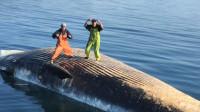 鲸鱼尸体漂浮在海面,小伙跳上去跳舞,可惜帅不过3秒