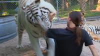 老虎跟女子相处10年,突然一口咬住女孩,镜头拍下全过程