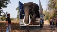 大象怎么坐长途汽车呢?小心翼翼的模样,惹人捧腹