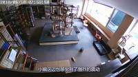 地震发生前几秒,屋里的24只猫,同时上蹿下跳