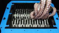 老外把章鱼放进搅碎机,场面瞬间失去控制,章鱼:这是人干的事吗?