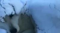 """什么叫做""""冻成狗""""?看看这个视频你就知道了!"""