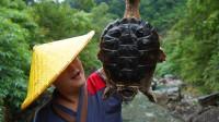 400元买一只9斤重的鳄龟,加上辣椒一起干煸,这味道真让人着迷