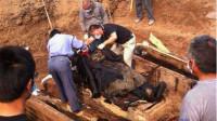湖北发现千年古墓,墓中一活物2000年不死,专家惊呼不可能